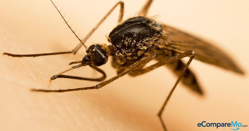 Banner-Dengue-Vaccine