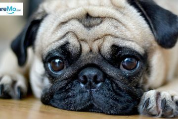 The Cost Of Owning And Keeping A Pet In The Philippines