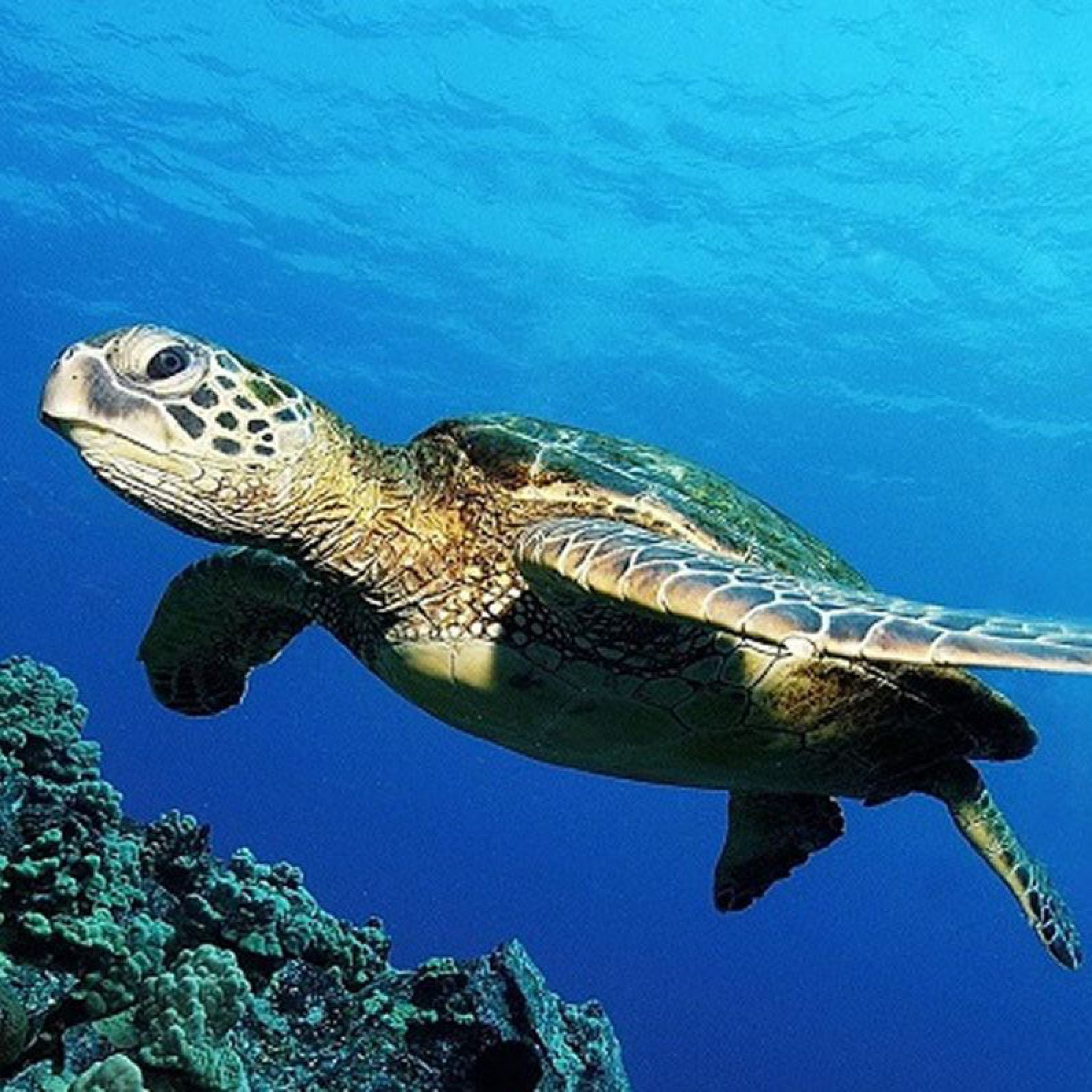 Scuba Diving Places in the Philippines