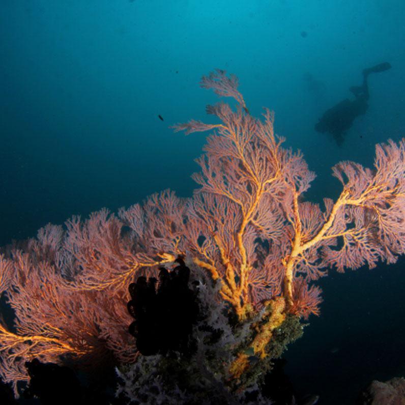Maasim Reef