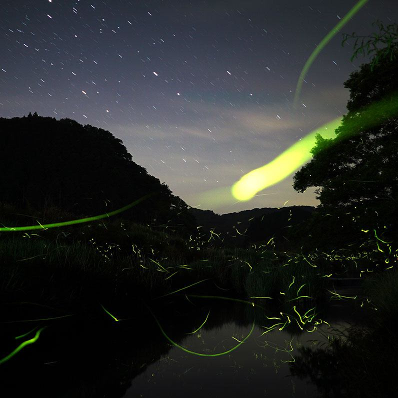 Iwahig Firefly Watching and Mangrove Forest